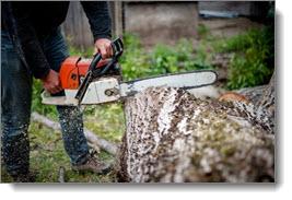 cutting_tree